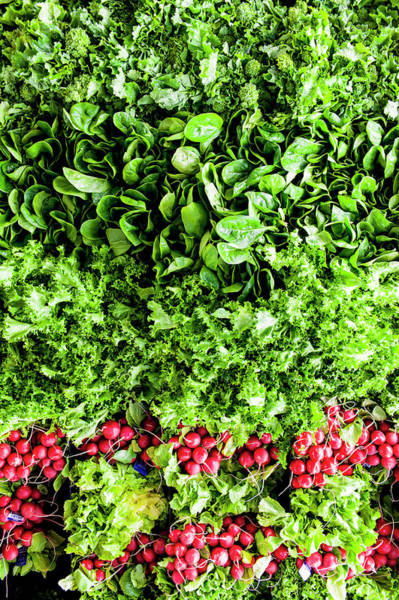 Vitamin Photograph - Ariel View Of Salad Leaves And Radishes by Liam Bailey