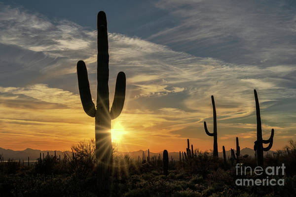 Wall Art - Photograph - Arizona Beauty by Sandra Bronstein