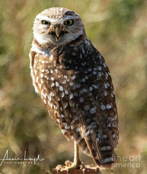Wall Art - Photograph - Arizona Burrowing Owl by Ann Loyd