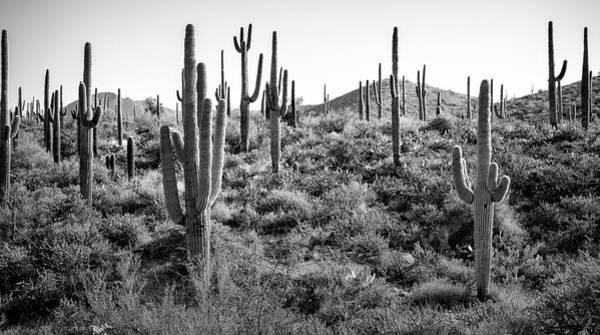 Wall Art - Photograph - Arizona Saguaro Cactus by Robert Hayton