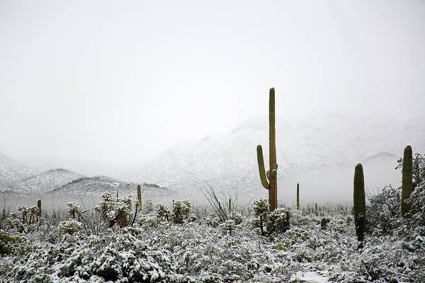 Photograph - Arizona Snow by Jean Clark