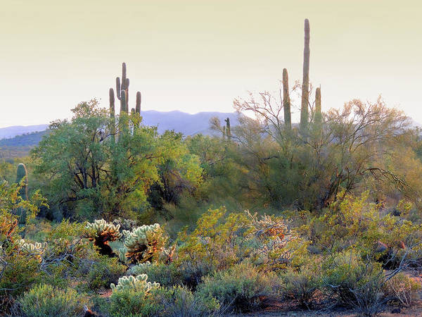 Chandler Photograph - Arizona Spirit  by Gordon Beck