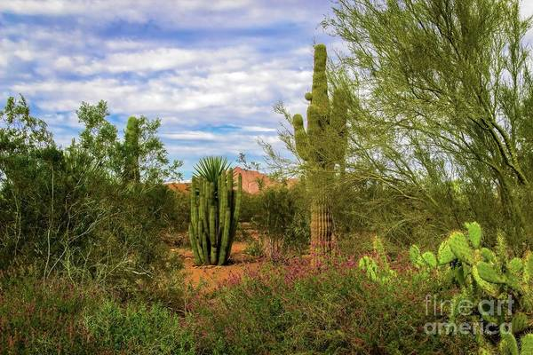 Photograph - Arizona Spring Morning by Jon Burch Photography