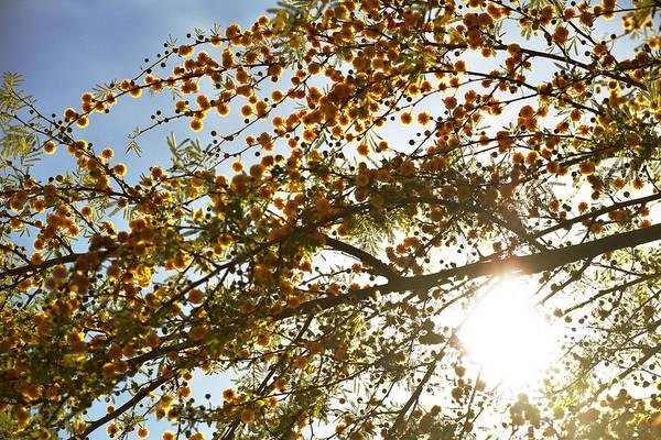 Photograph - Arizona Spring Radiance by Chance Kafka