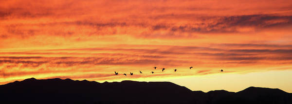Photograph - Arizona Sunset Of The Mule Mountains by Jean Clark
