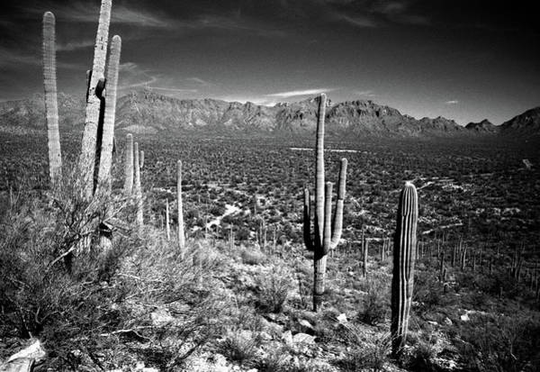 Horizontal Landscape Photograph - Arizona, Tucson, Saguaro Np, Brown by James Denk