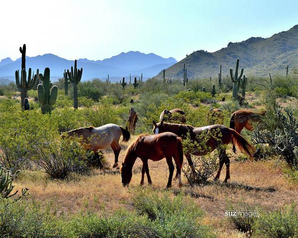 Photograph - Arizona Wild Horses by Susie Loechler