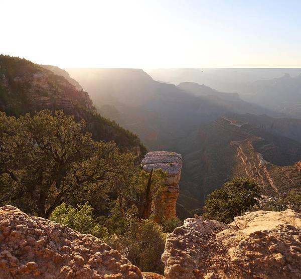 Photograph - Arizona Wilderness by Sagittarius Viking