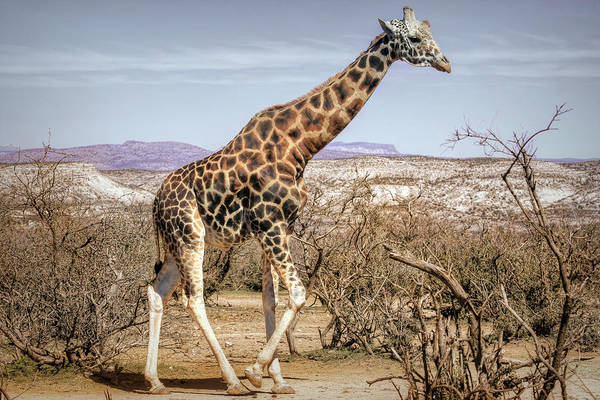Wall Art - Photograph - Arizona Wildlife by Donna Kennedy