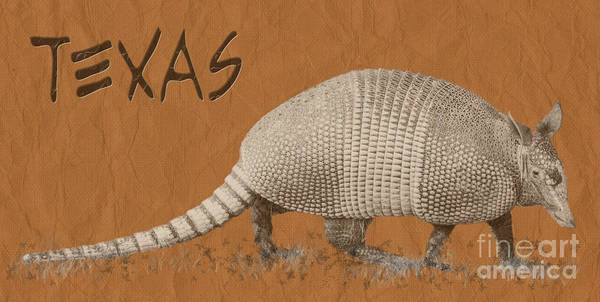 Photograph - Armadillo by Cheryl McClure