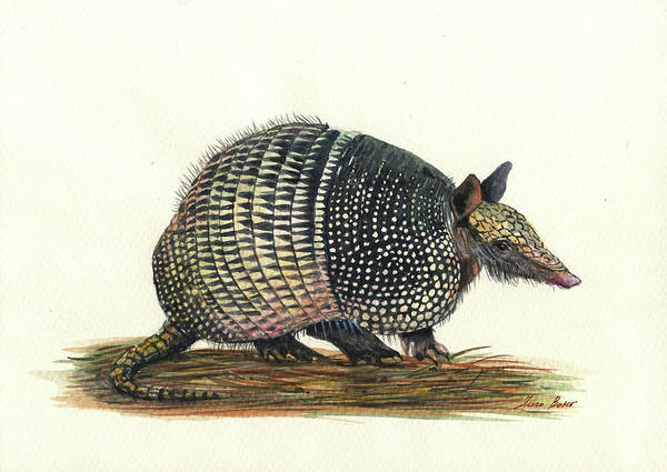Wall Art - Painting - Armadillo Painting by Juan Bosco