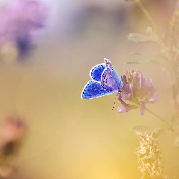 Photograph - Around The Meadow 4 by Jaroslav Buna