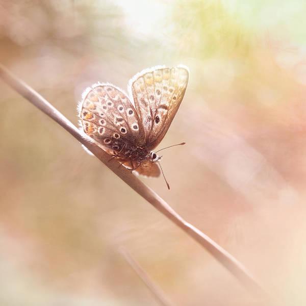 Photograph - Around The Meadow 5 by Jaroslav Buna