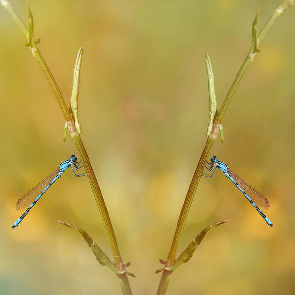 Photograph - Around The Meadow 6 by Jaroslav Buna