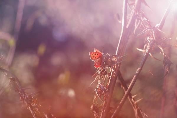Photograph - Around The Meadow 7 by Jaroslav Buna