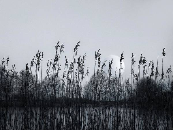 Photograph - Around The Pond by Jaroslav Buna