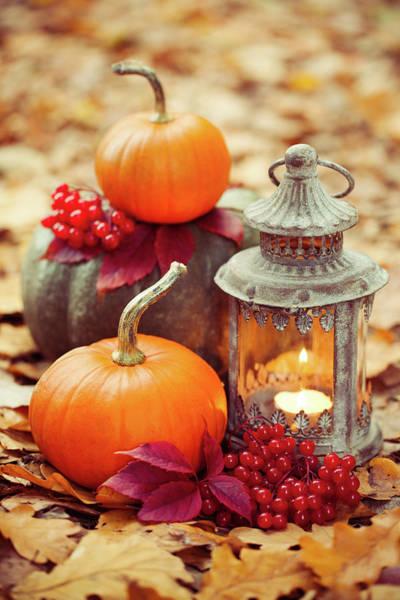 Vertical Garden Photograph - Arrangement With Pumpkins And Lantern by 5ugarless