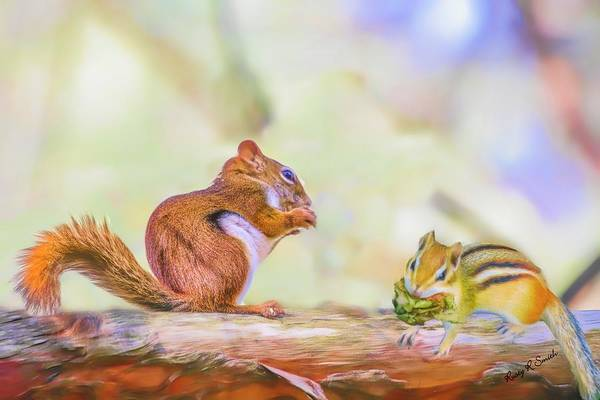 Photograph - Art Composite Photograph Of A Chipmunk And Red Squirrel Sharing  by Rusty R Smith