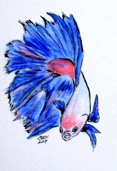 Painting - Art Doodle No.33 Betta Fish by Clyde J Kell