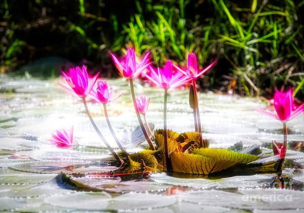 Wall Art - Digital Art - Art Flair Flowers Pods Vietnam  by Chuck Kuhn