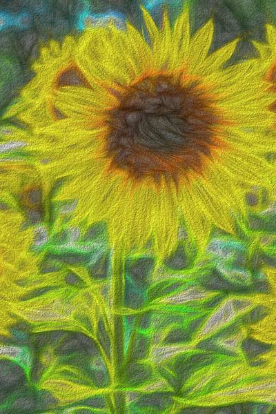 Wall Art - Photograph - Art Of The Single Sunflower by David Pyatt