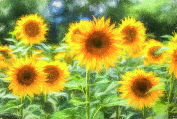 Wall Art - Photograph - Art Of The Sunflower Turner by David Pyatt