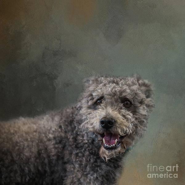 Photograph - Arthur by Eva Lechner