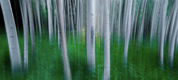 Wall Art - Photograph - Artistic Aspens Panorama by Larry Marshall