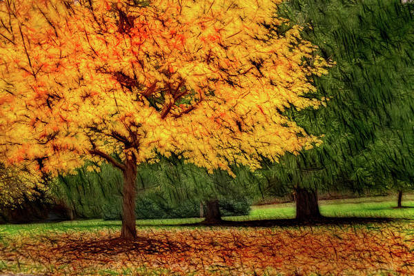 Photograph - Artistic Autumn Gold by Don Johnson