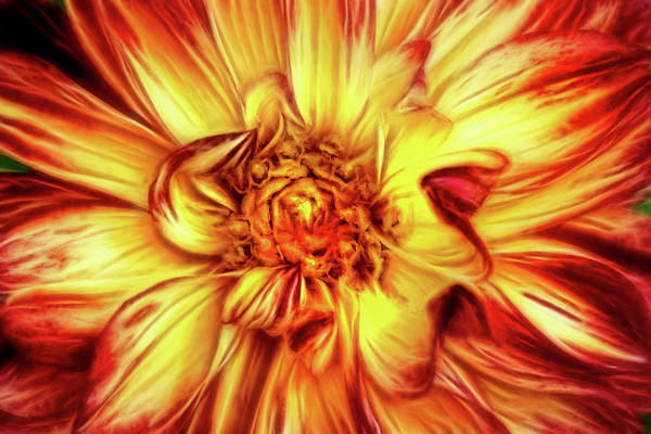 Photograph - Artistic Dahlia In Multicolors by Don Johnson