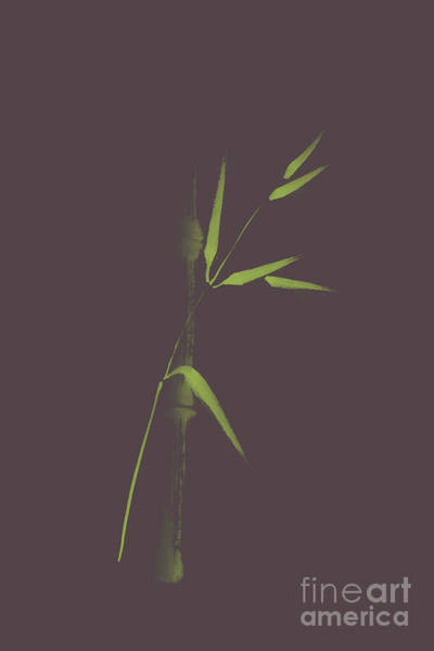 Single Leaf Mixed Media - Artistic Design Of A Single Light Green Bamboo Stalk And A Branc by Awen Fine Art Prints