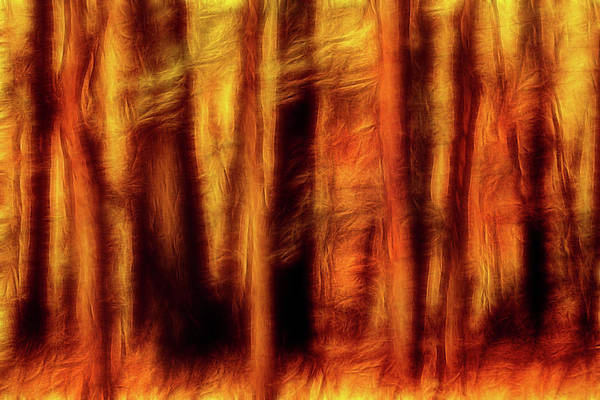 Photograph - Artistic Fall Forest Swipe by Don Johnson