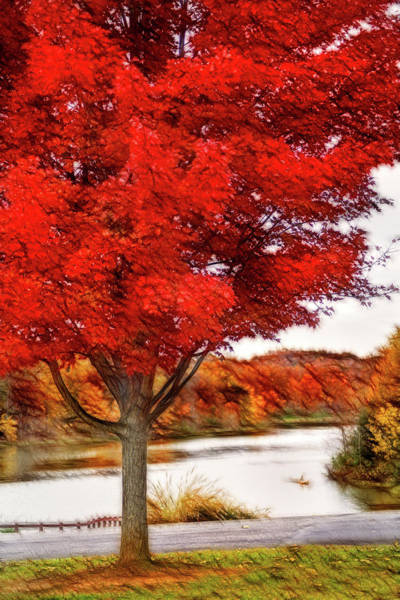 Photograph - Artistic Fall Tree At Lake by Don Johnson