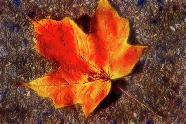 Photograph - Artistic Fallen Autumn Leaf by Don Johnson
