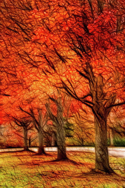 Photograph - Artistic Four Fall Trees by Don Johnson
