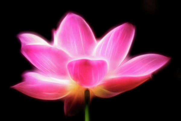 Photograph - Artistic Lotus--national Zoo by Don Johnson