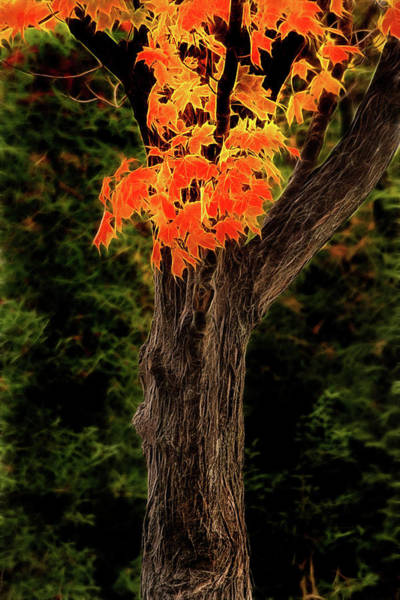 Photograph - Artistic Maryland Autumn Tree by Don Johnson