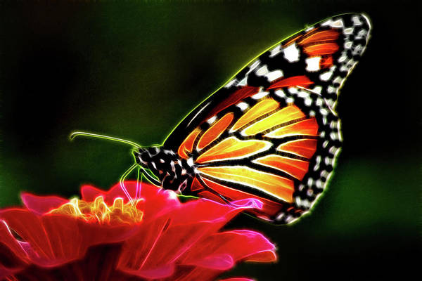 Photograph - Artistic Monarch by Don Johnson