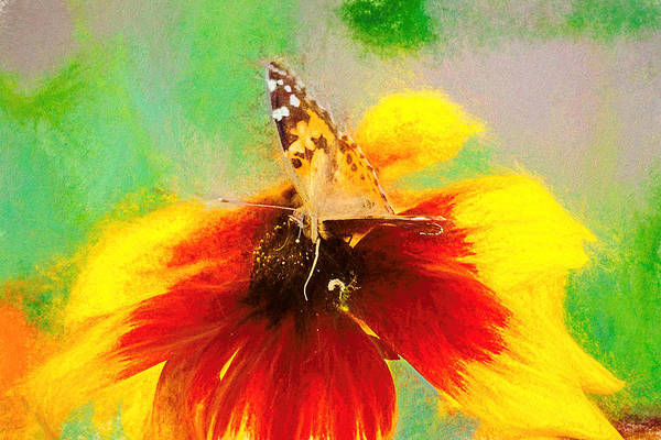 Photograph - Artistic Painted Lady Butterfly by Don Northup