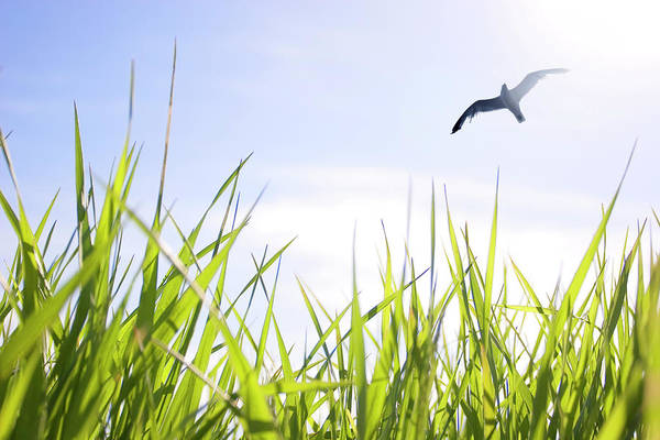 Family Time Wall Art - Photograph - Artists Choice Seagull Soaring Above by Vast Photography