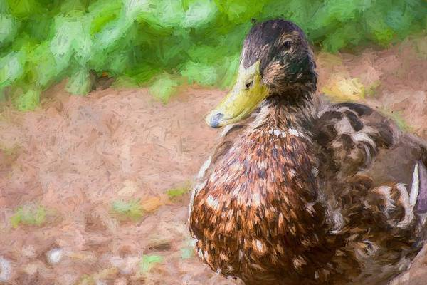 Photograph - Artsy Duck Hopper by Don Northup