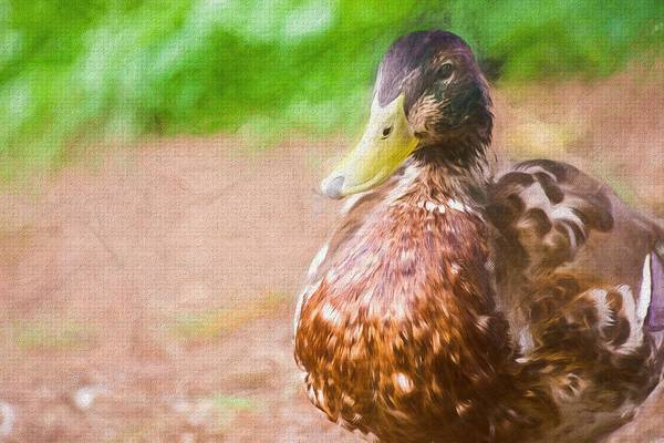 Photograph - Artsy Duck Painted by Don Northup