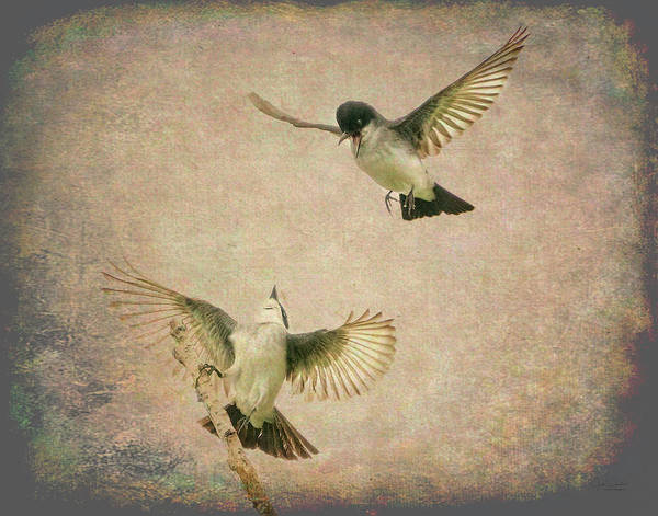 Digital Art - Artsy Flirting Kingbirds by Judi Dressler