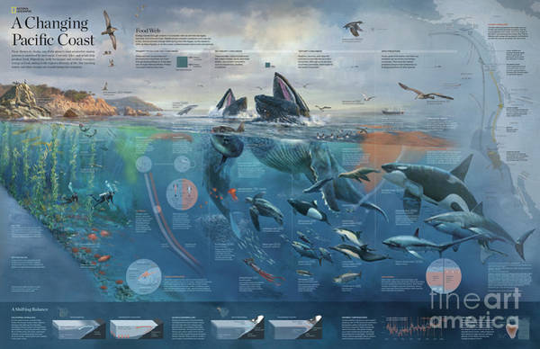 Photograph - Artwork Depicting The Marine System Of The Pacific Coast. by Fernando G Baptista