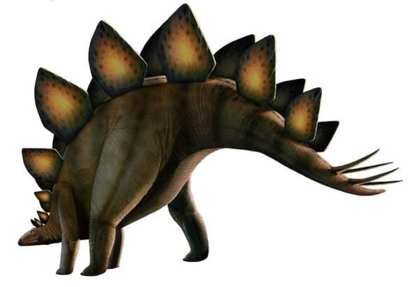 Paleozoology Wall Art - Digital Art - Artwork Of A Stegosaurus Dinosaur by Mark Garlick