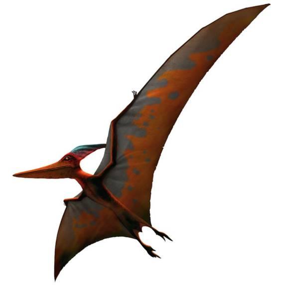 Paleozoology Wall Art - Digital Art - Artwork Of Pteranodon Sternbergi by Mark Garlick