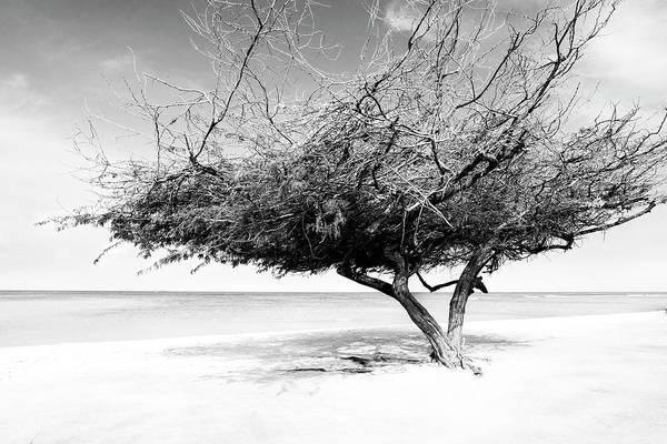 Photograph - Aruba Tree by Yuri Darius