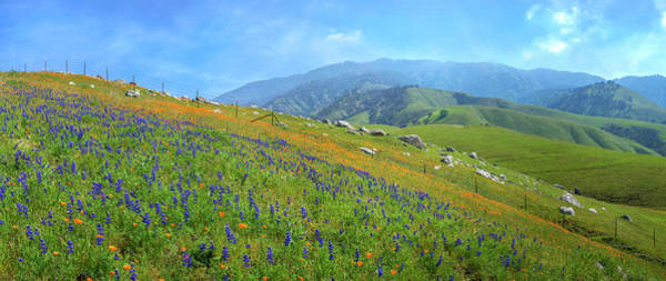 Photograph - Arvin Hills Panorama by Lynn Bauer