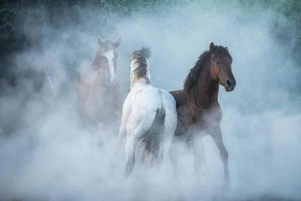 Wall Art - Photograph - As The Dust Flies  by Saija Lehtonen