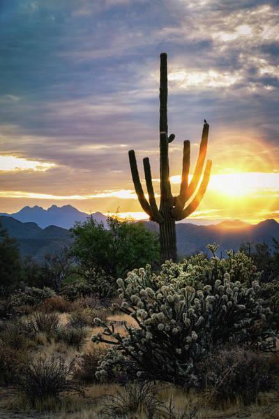 Wall Art - Photograph - As The Sun Rises On The Sonoran  by Saija Lehtonen